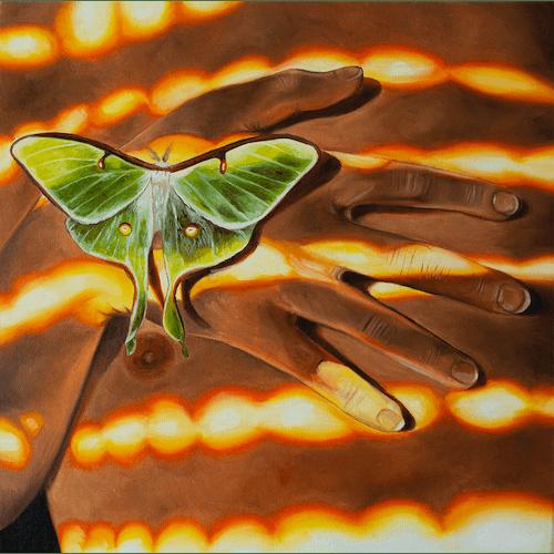 Moth by Ian Bertolucci