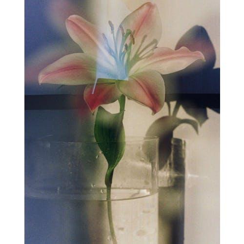 Image: Toshiaki Kitaoka, Equally Beautiful, 2020