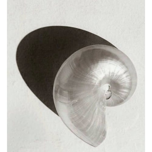 Image Nautilus by Julia Noni